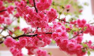 我和樱花有个约会2